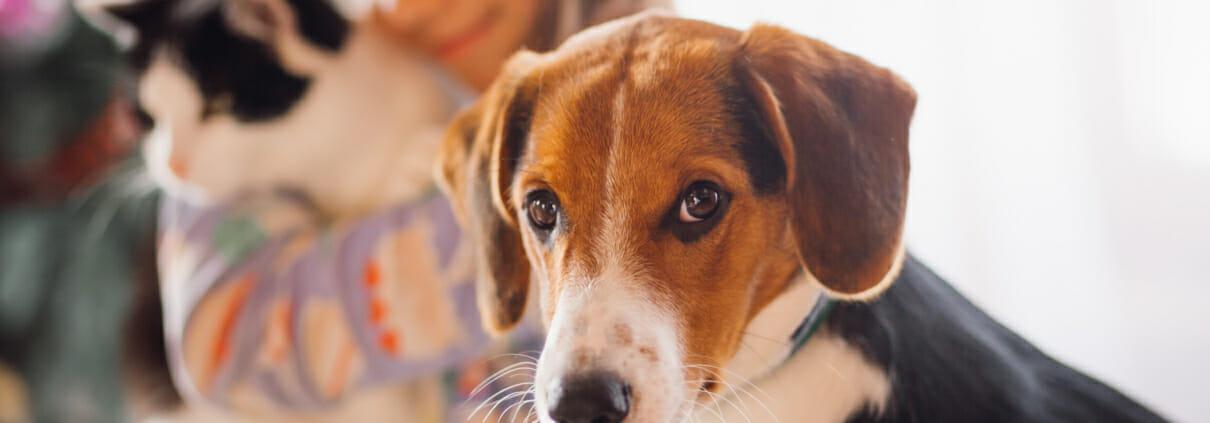 Elektrosmog belastet unsere Haustiere