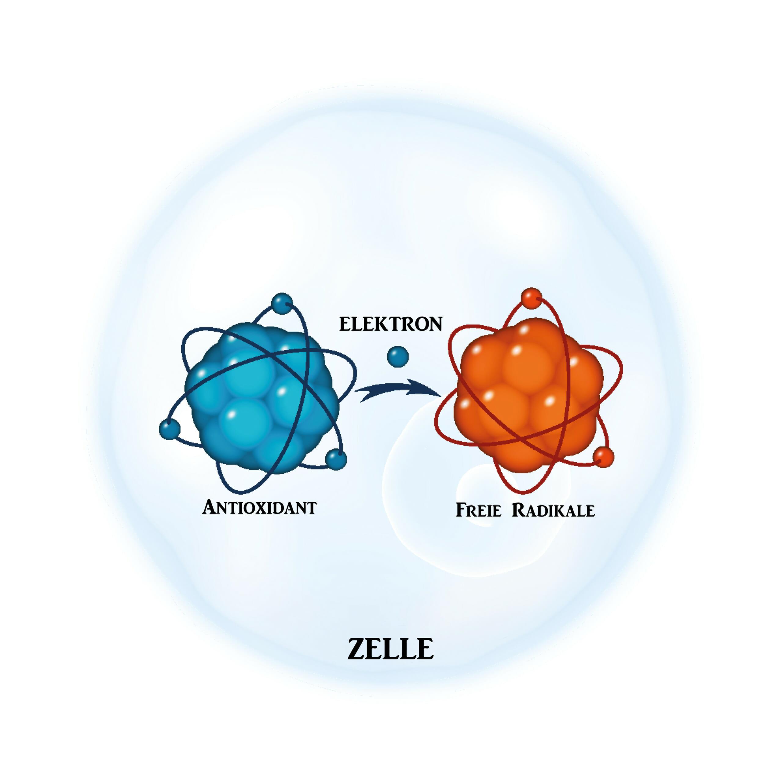 Zelle mit freiem Radikal und Antioxidant