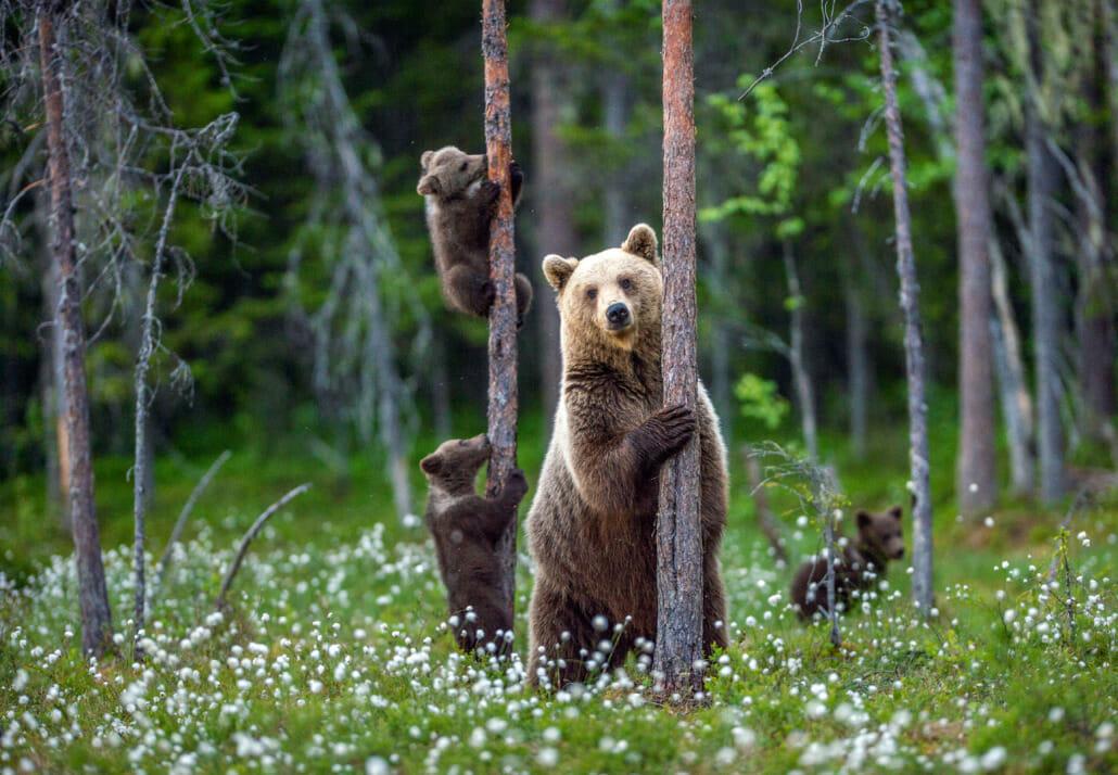 Baum spenden für Bären