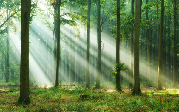 Forest bathing - Japanese relaxation and mindfulness method